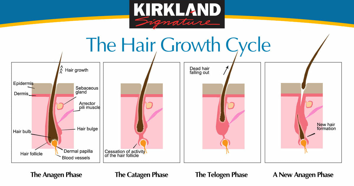 Hair Growth Stages and How Minoxidil Helps - MinxoidilUK