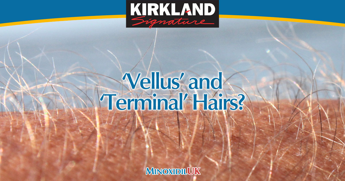 What are Vellus and Terminal Hairs